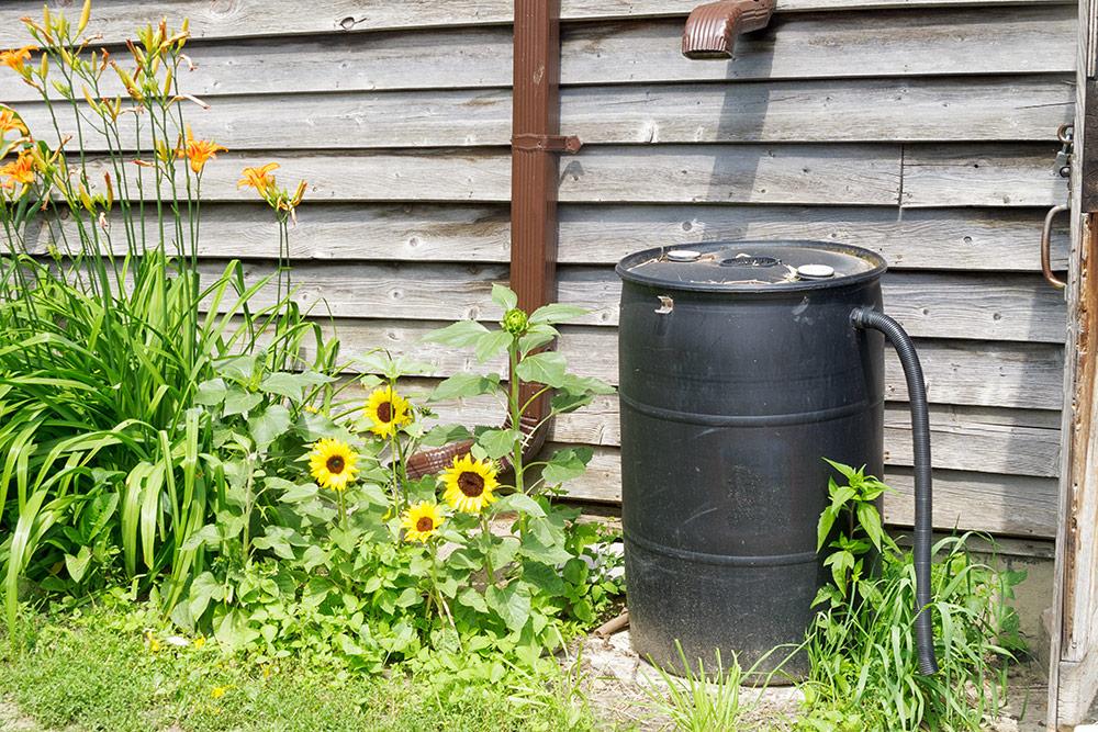 Rain Barrel Next To Garden