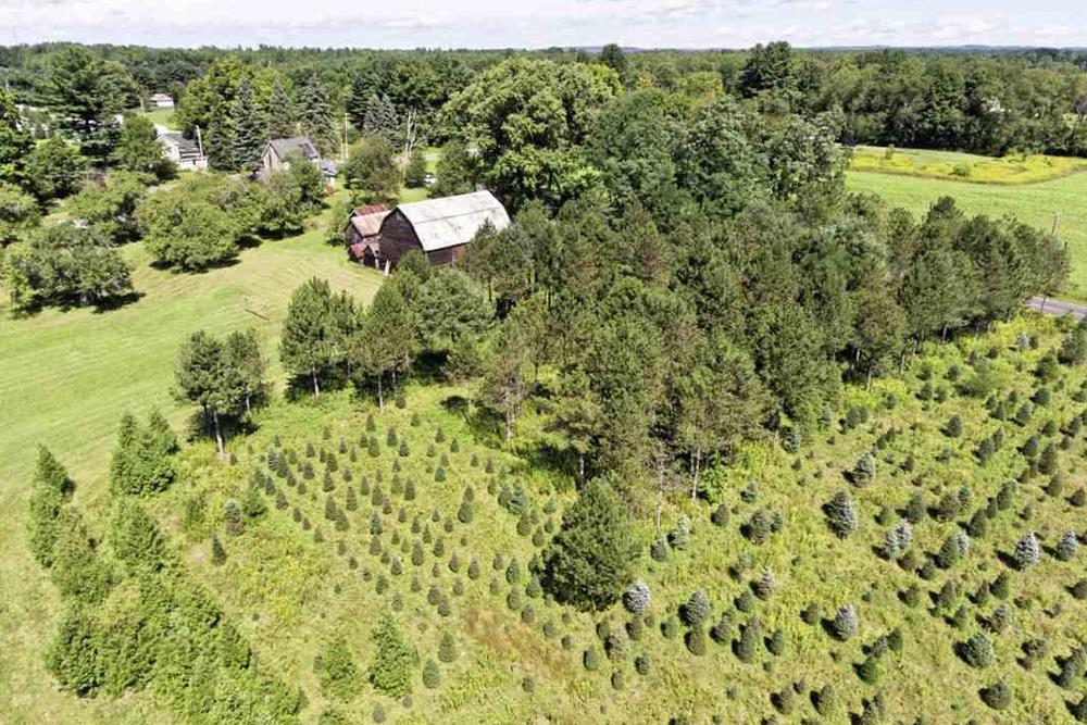 best 28 christmas tree farms upstate ny moody tree